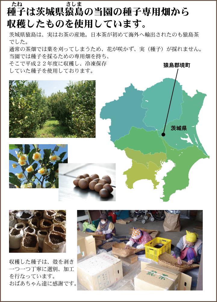 お茶のタネの産地は茨城県境町